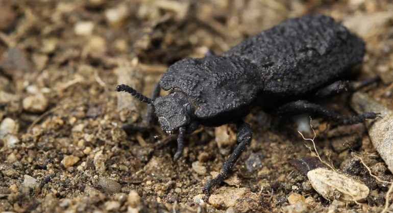 The beetle armor provides clues to tough planes