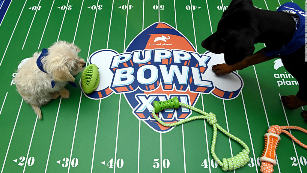 Everything is ready: The Puppy Bowl is back
