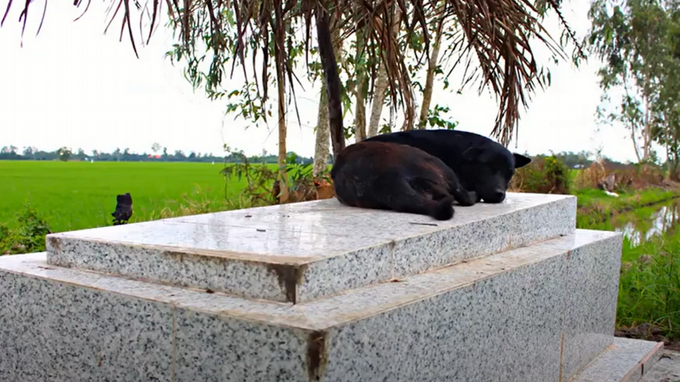 The dog that never left the grave of a two-year-old boy drowned in Vietnam