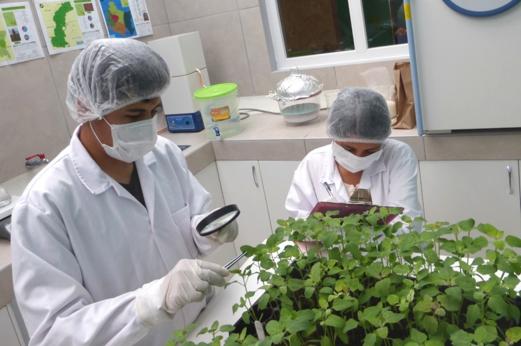 Create two committees to strengthen governance in science and technology in Peru |  News