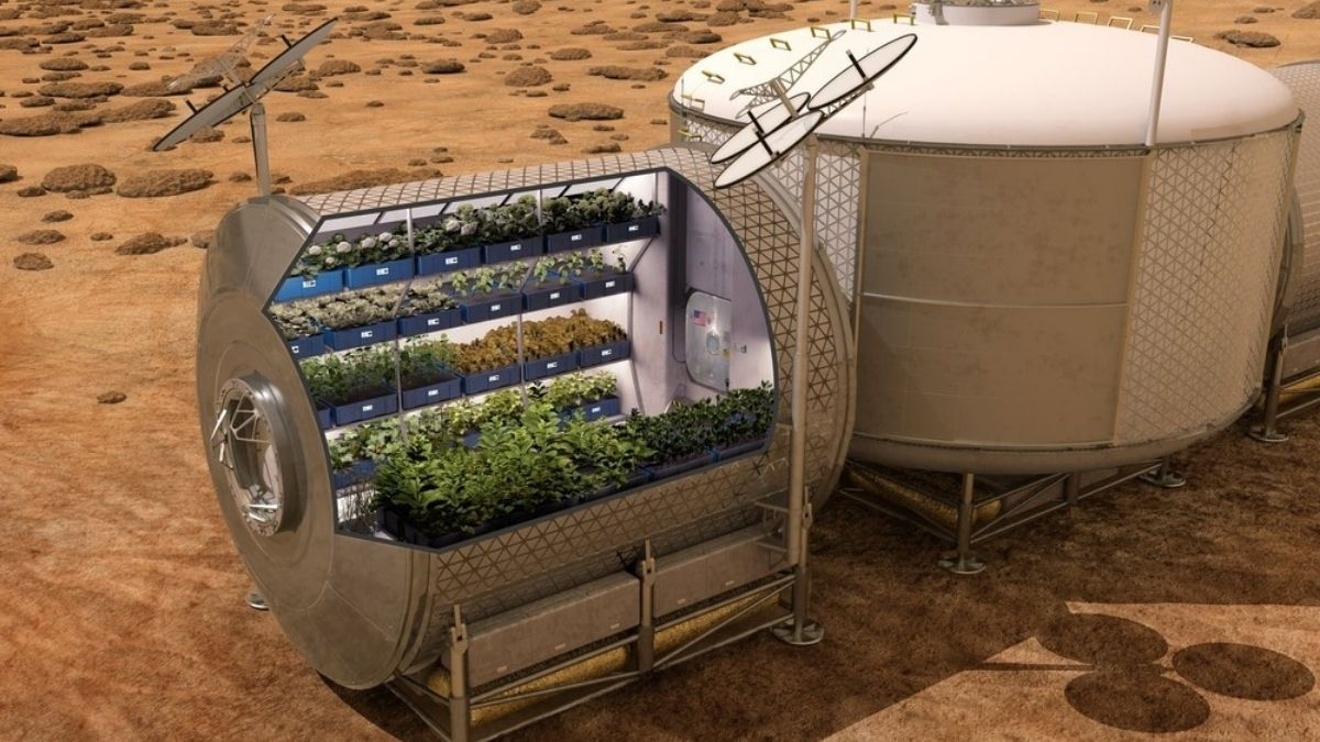 NASA gives the best idea for growing potatoes in space