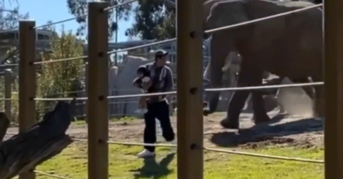 A man took his daughter to the elephant area at the zoo, where they had to escape an attack