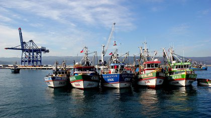 Illustrative photo of ships of Chinese origin carrying out fishing activities near Ecuador's exclusive economic zone