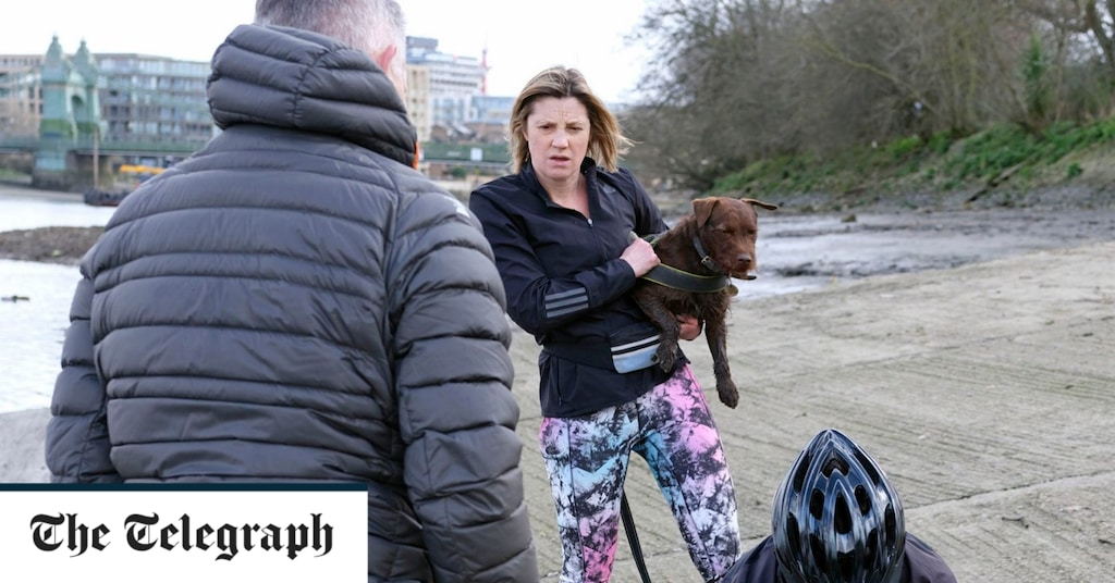London Seal Euthanised After Ferocious Dog Attack