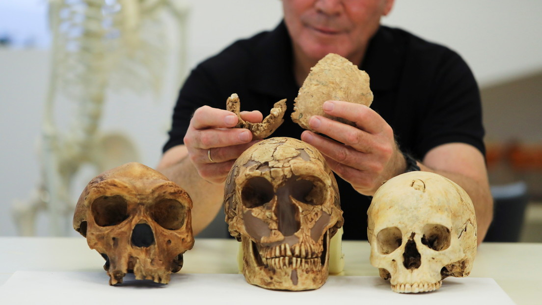 A new species of prehistoric human has been discovered in Israel