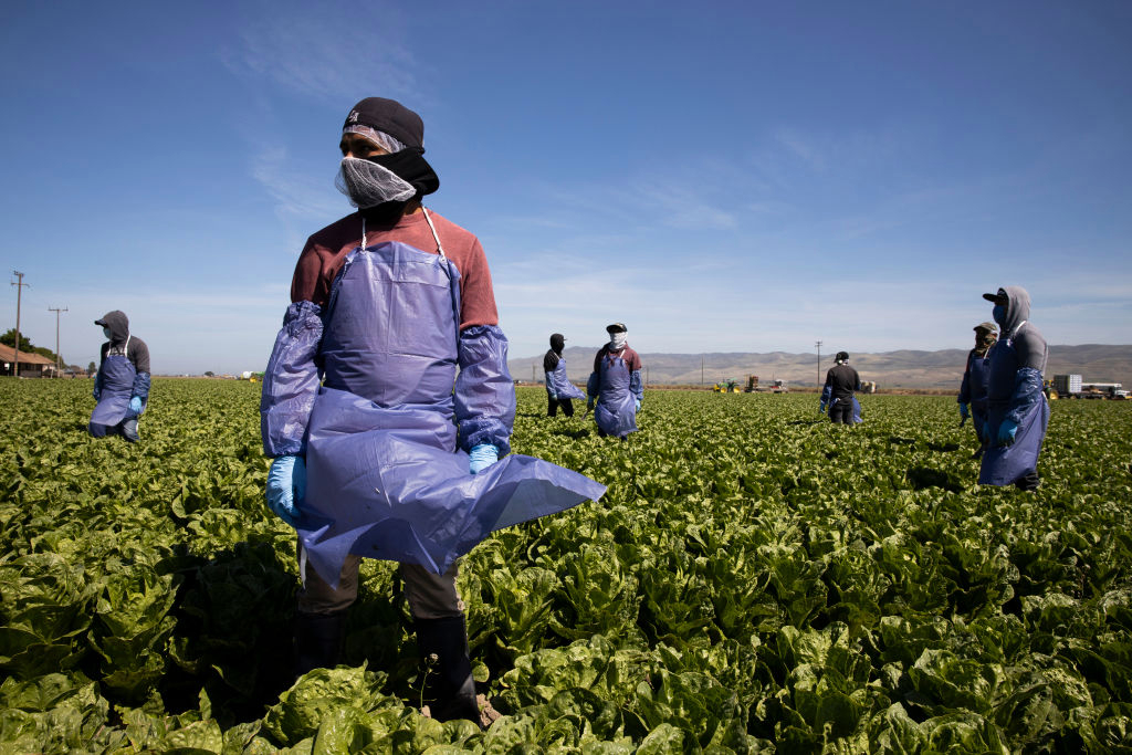 How to Apply for a US H-2A Temporary Agricultural Work Visa