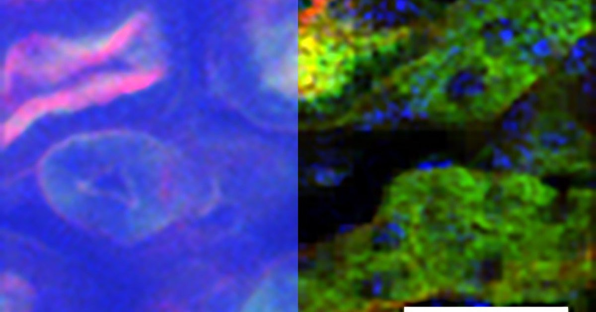 Science.  New imaging technology could advance research in biology and neuroscience