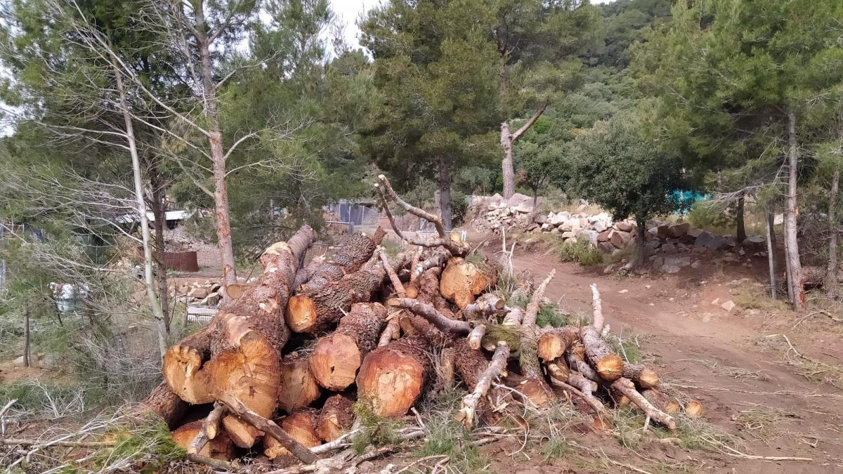They condemn illegal logging in a protected natural area in Tarragona