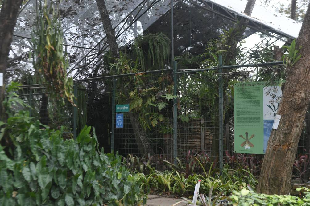 Guayaquil Botanical Garden, a natural space offered as a good option for visitors |  community |  Guayaquil