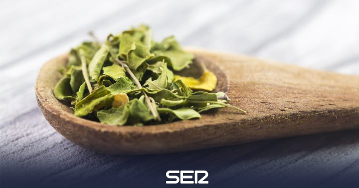 Moringa, the super ingredient for fettuccine!  |  Science and Technology