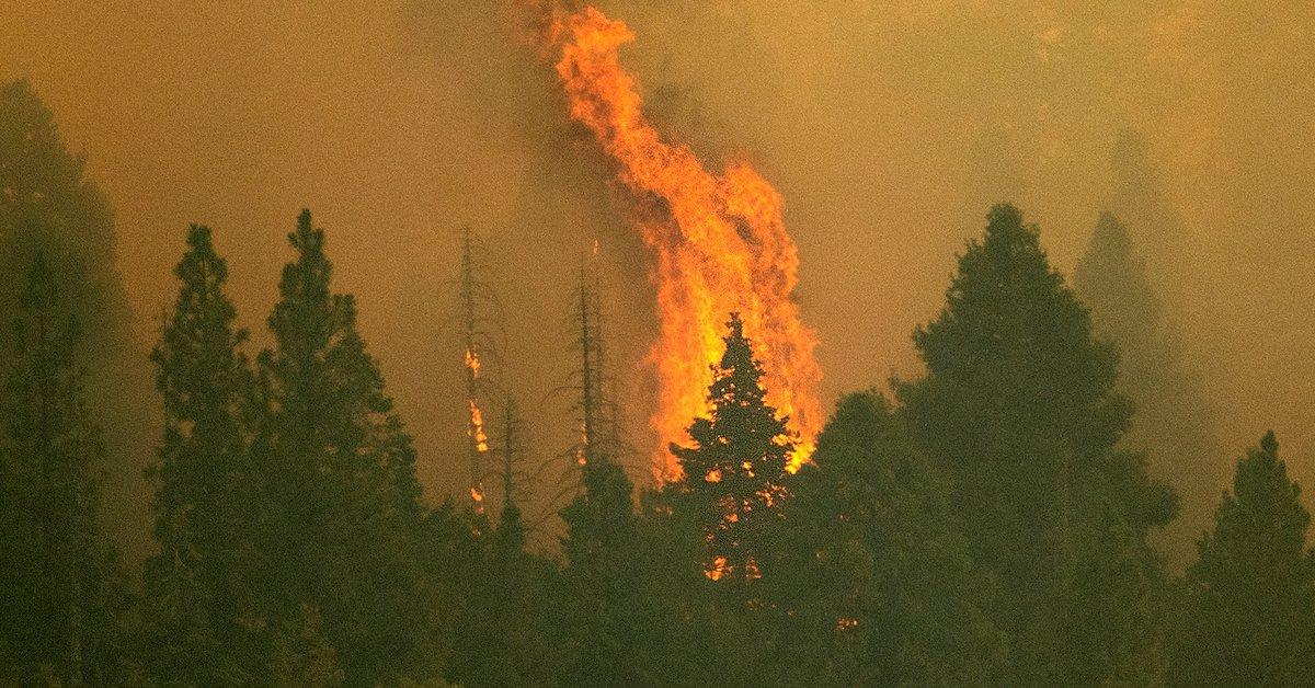 California wildfire: The world's largest tree was covered with a blanket to protect it from flames