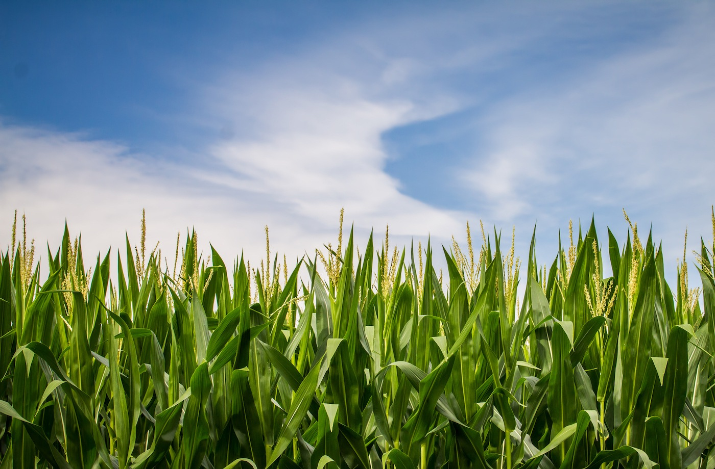 For Climate Change and Agriculture, Are GMOs the Future?